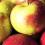 Autunno, è tempo di mela rosa
