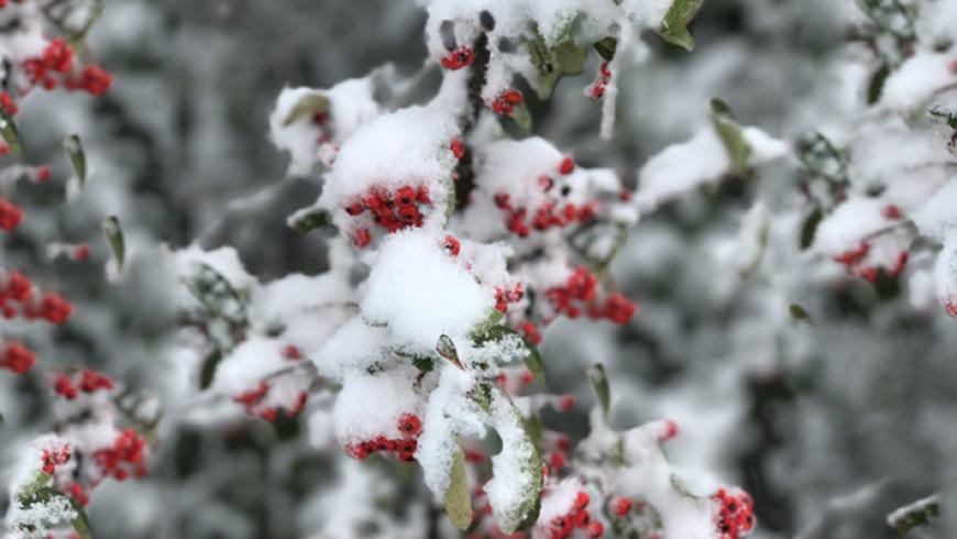 Come proteggere le piante dalla neve?