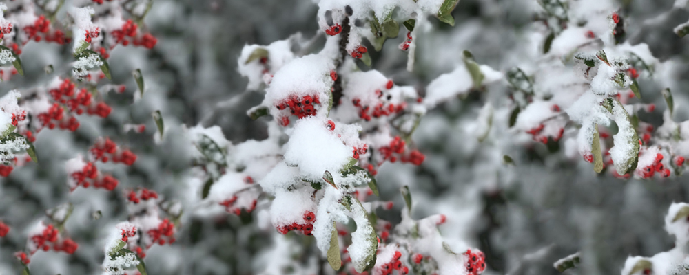 piante-e-neve.jpg