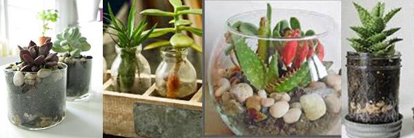4 decorazioni per la casa riciclando i barattoli di vetro - Vasi con piante grasse ...