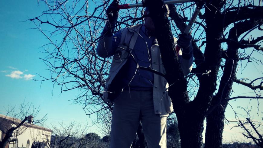 (Italiano) La potatura degli alberi da frutto