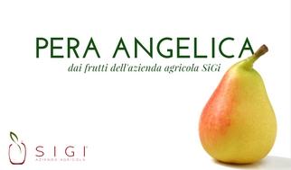 Pera Angelica