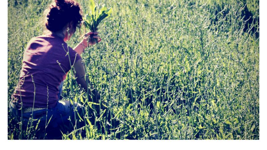 I rugni, le speragne e le crespigne: le erbe spontanee tipiche delle Marche
