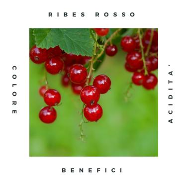 (Italiano) Ribes rosso: caratteristiche e proprietà