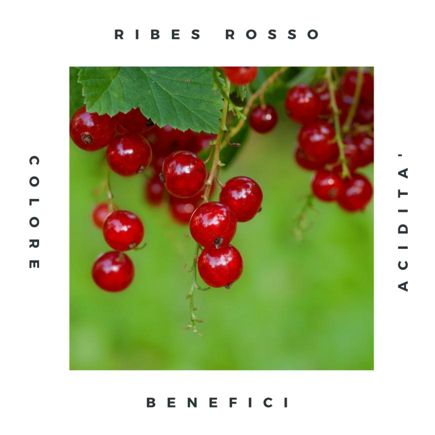 Ribes rosso: caratteristiche e proprietà