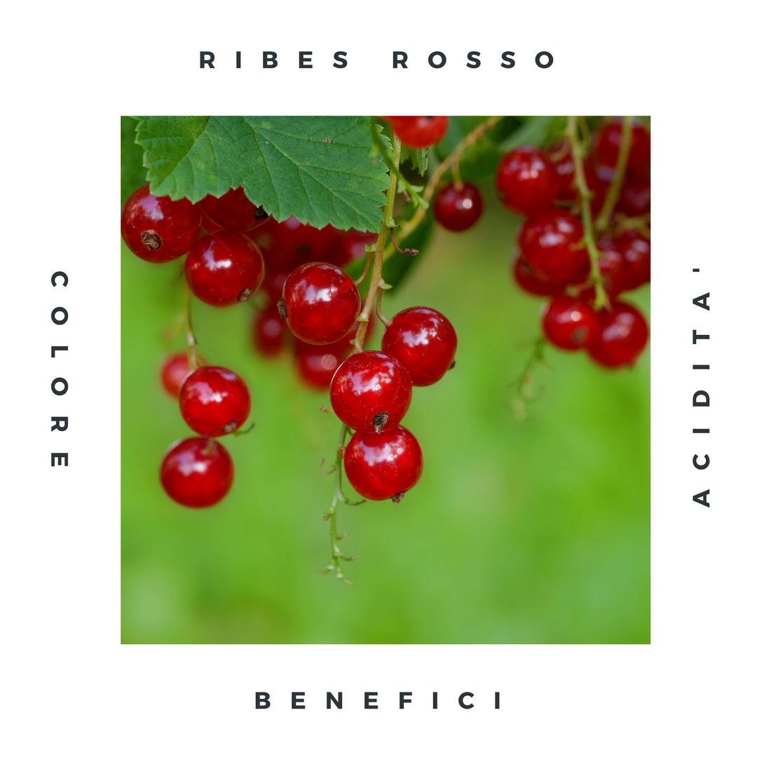 ribes-rosso.png