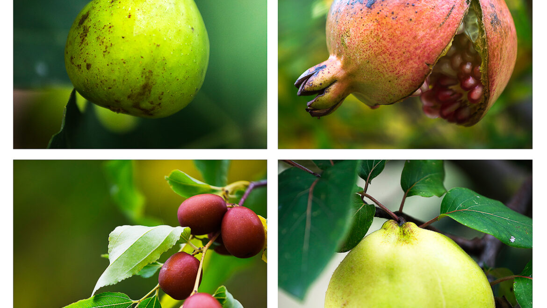 Frutti da fiaba
